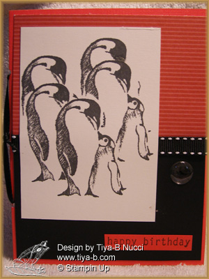 penguins and little penguins