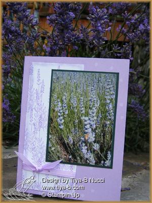 lavender-in-lavw