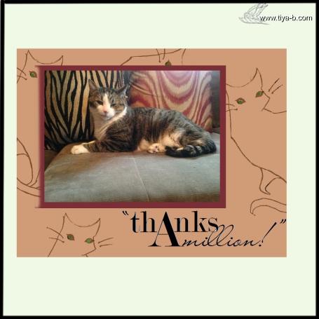 cats-&-pillows