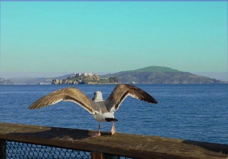 flt to alcatraz_ctclr