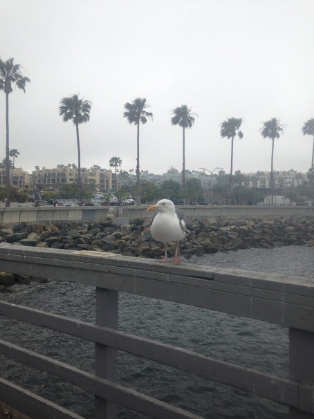 gull-at-pier