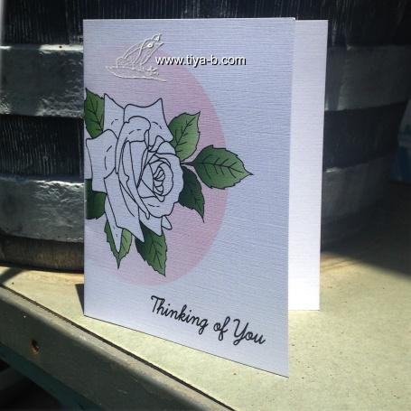 white-springrose